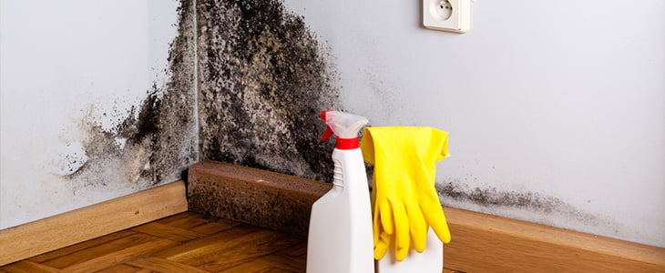 what are the dangers of damp